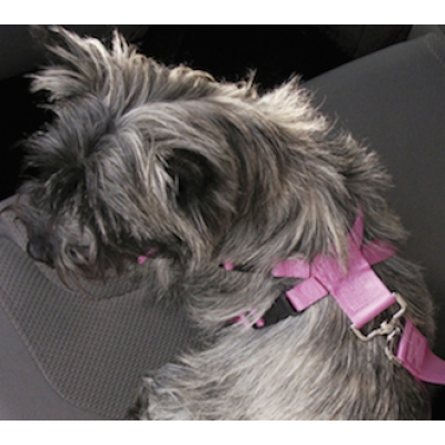 Soft Protection Car Travel Harness