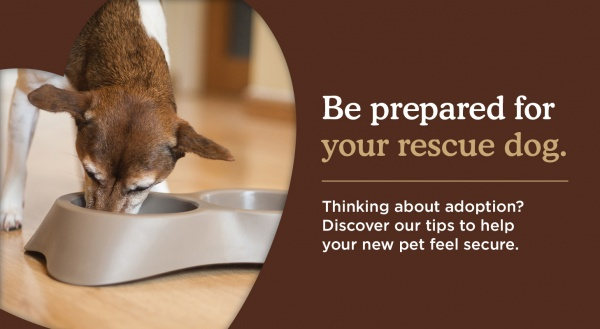 Make sure you're prepared for your rescue dog