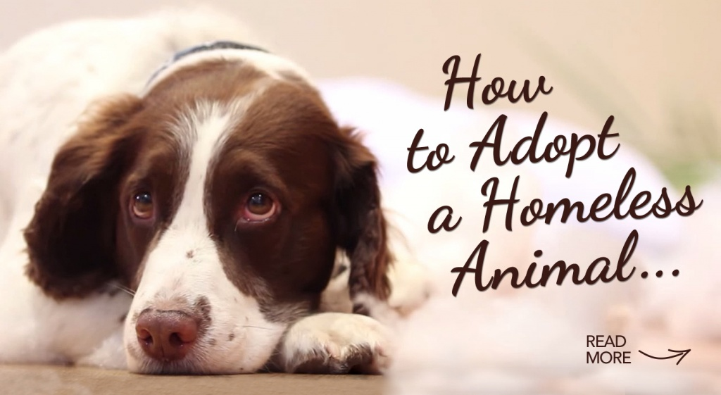 How to Adopt a Homeless Animal