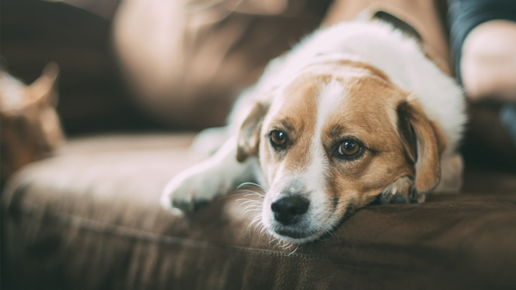 Is your pet anxious? How mental health affects our pets