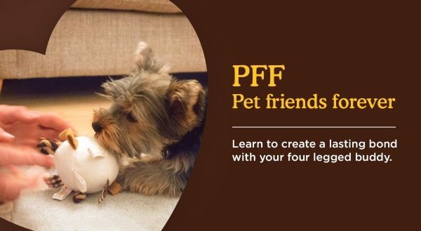 Create a long lasting bond with your pet