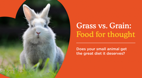 Grass v Grain: Food For Thought