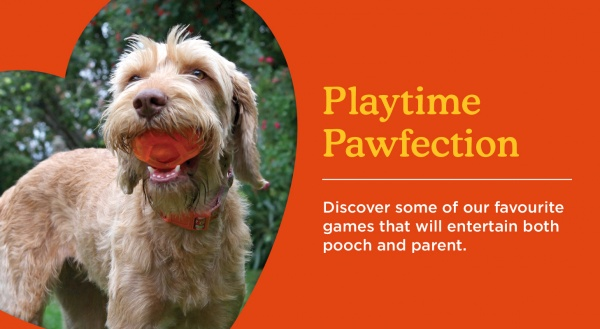 Playtime, Not Just For Your Pet!