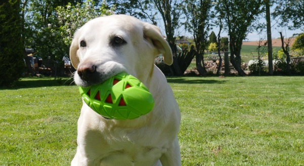 Top New Products To Get Tails Wagging This Summer
