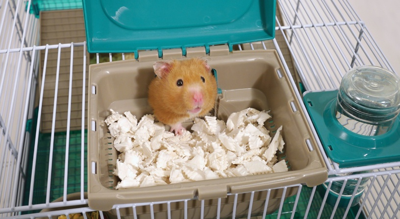 Choosing The Perfect Hamster Home For Your Furry Friend Rosewood Pet