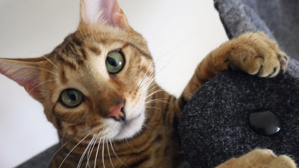 Pet Parent Resolutions for a purr-fect 2019