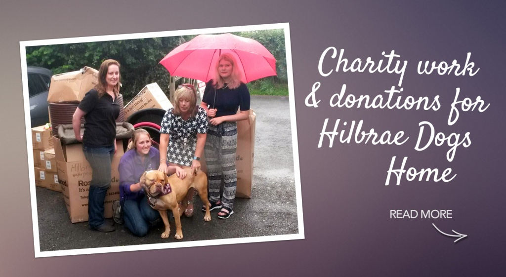 Hilbrae Dogs' Home – Charity Work and Donation