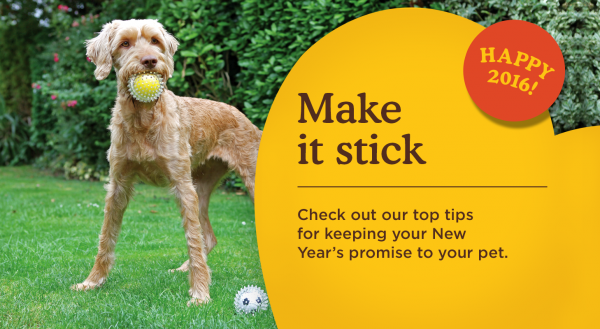 Reach your goals in 2016 with the help of your pet