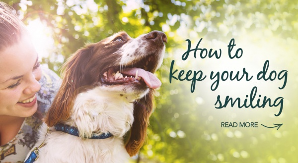 How to keep your dog smiling